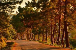 route sur la forêt de pins d'automne