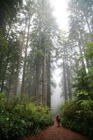 sentier forestier de séquoia avec randonneur