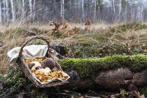 Autriche, forêt, champignons dans le panier photo