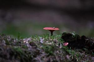 premier champignon d'automne dans la forêt photo
