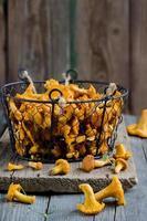 Champignons chanterelles des bois dans un panier