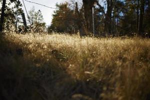herbe avec le fil de fer barbelé à l'arrière photo