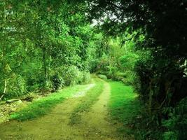 route dans le village