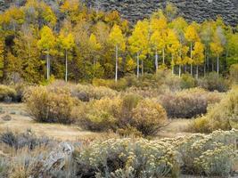 Forêt d'automne le long de la boucle du lac de juin, Californie