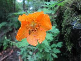 fleur simple orange vif photo