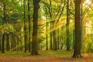 belle photo de la forêt à l'aube au soleil