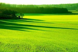 champ vert en hiver
