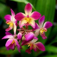 Fleurs d'orchidées au sol dans la forêt tropicale humide