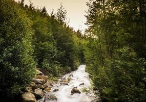 l'eau tombe au milieu de la forêt photo