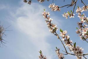 arbres en fleurs sur le champ printemps dans la forêt photo