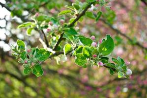 les branches fleuries des arbres de la forêt photo
