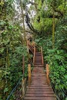 Forêt moussue de gunung brinchang, cameron highlands malaisie