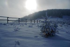 Prairie dans les montagnes beskid en hiver photo
