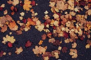 feuilles sèches sur la route