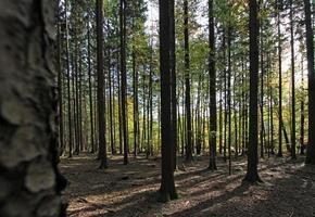 forêt avec des arbres à feuilles caduques photo