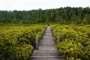 pont entre la mangrove, la Thaïlande.