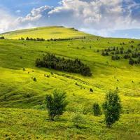 forêt de conifères à flanc de colline