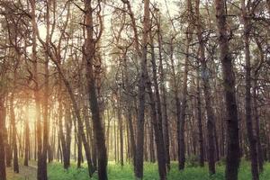 la nature photo