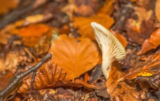 Champignon dans la forêt de montagne en france photo
