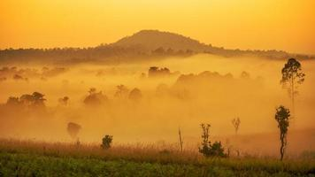 coloré de brume printanière, brouillard humide de forêt