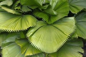 belles feuilles de palmier d'arbre dans la forêt tropicale photo