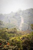 chemin de terre à travers la jungle africaine photo