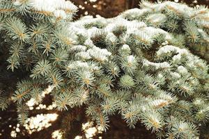 branches de neige photo