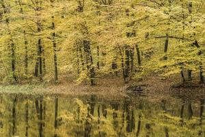 Réflexion des arbres dans un lac de la forêt au cours de l'automne
