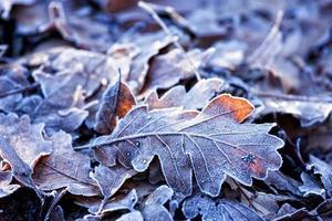 feuilles photo