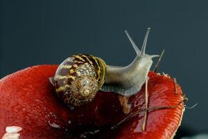 escargot et champignon photo