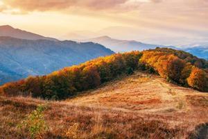 Forêt de bouleaux en après-midi ensoleillé pendant la saison d'automne