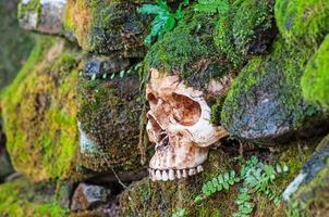 crâne sur mur de mousse
