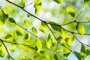Fond de nature verte abstraite ensoleillée, mise au point sélective photo