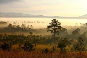 Lever du soleil du matin brumeux en montagne à Thung Salang Luang photo