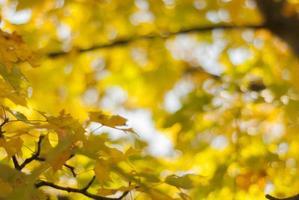 fond d'automne