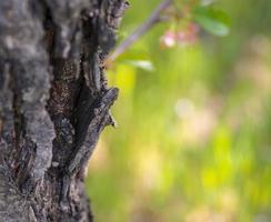 Tronc d'arbre avec de l'herbe verte floue en arrière-plan