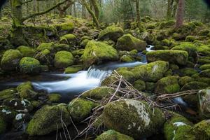 ruisseau sauvage dans la vieille forêt, mouvement de l'eau time lapse