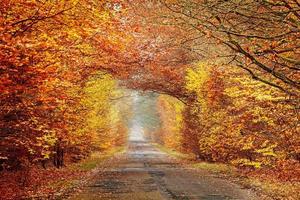 route dans une forêt automnale brumeuse, couleurs intenses filtrées.