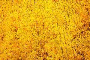 fond de feuilles d'or