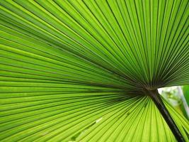 beau fond de feuille de palmier photo