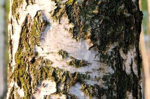 tronc d'arbre. photo