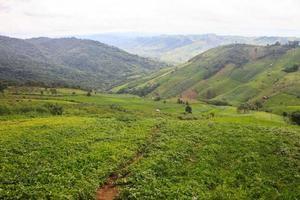 champs dans les montagnes photo