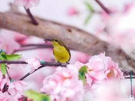 oiseau du soleil. photo