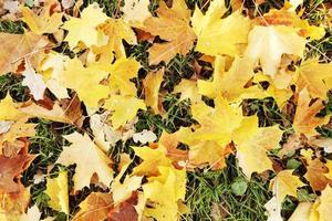 feuilles d'automne sur le sol