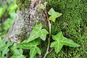 jeune fougère sur tronc d'arbre photo