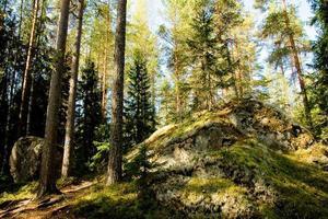 rocher dans la forêt photo