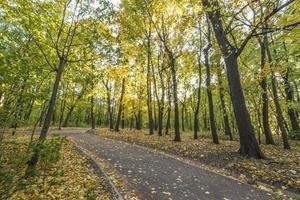 sentier dans la forêt d'automne. parc avec arbres jaunes