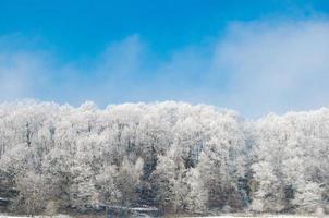 forêt glacée, bel hiver froid avec un ciel bleu clair