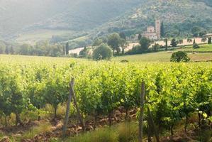 Ancien monastère sant'antimo parmi les vignobles en toscane, italie photo