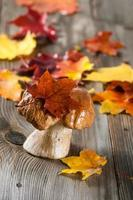 champignon blanc (cep)